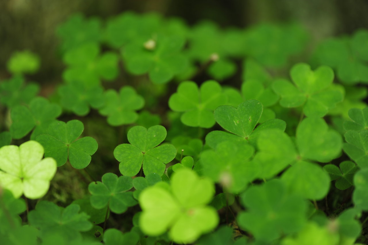 Have a Green St. Patty's Day!